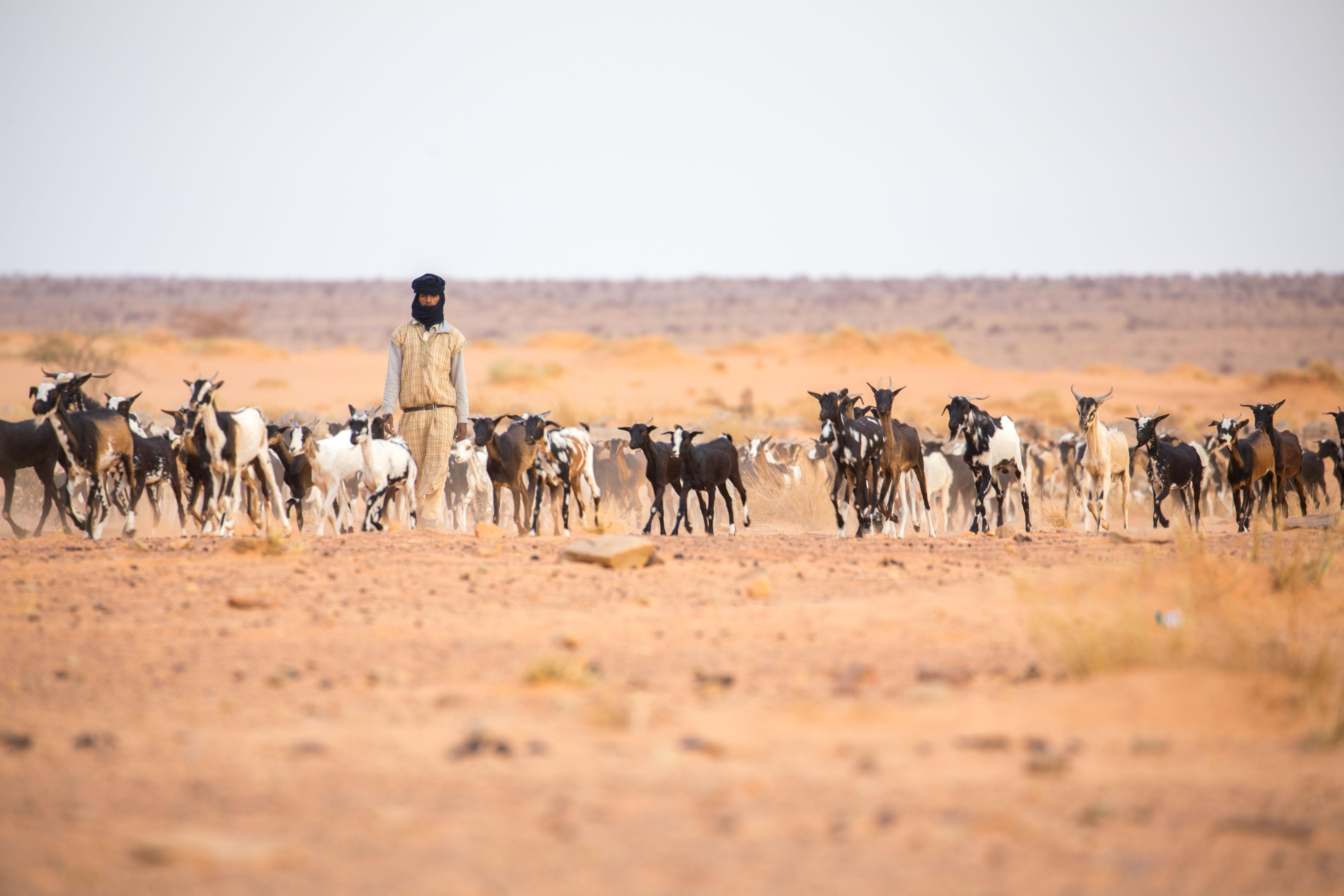 Berger nomade en direction d'un puit pour désaltérer les bêtes