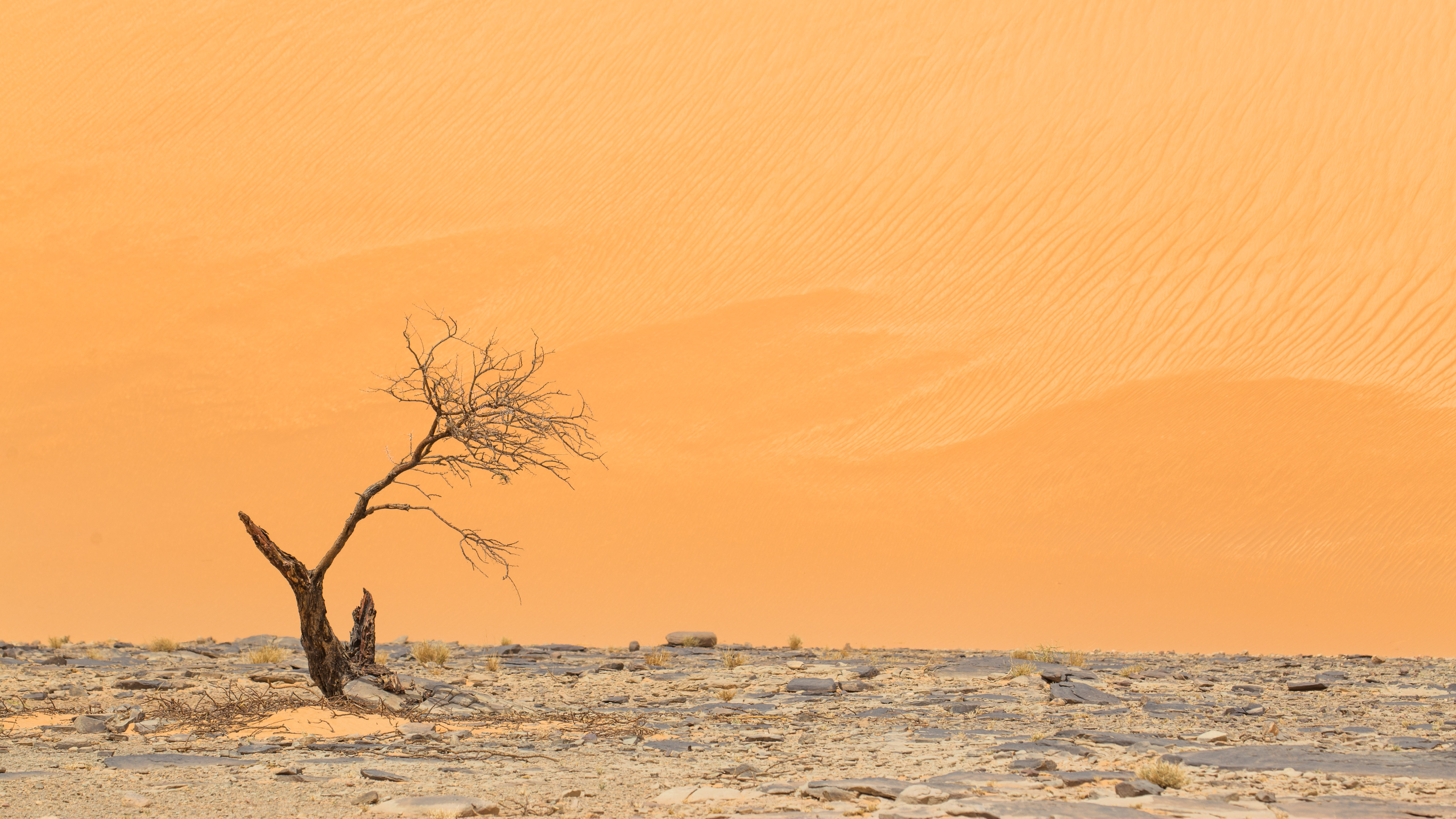 Acacia au pied du mont Zarga