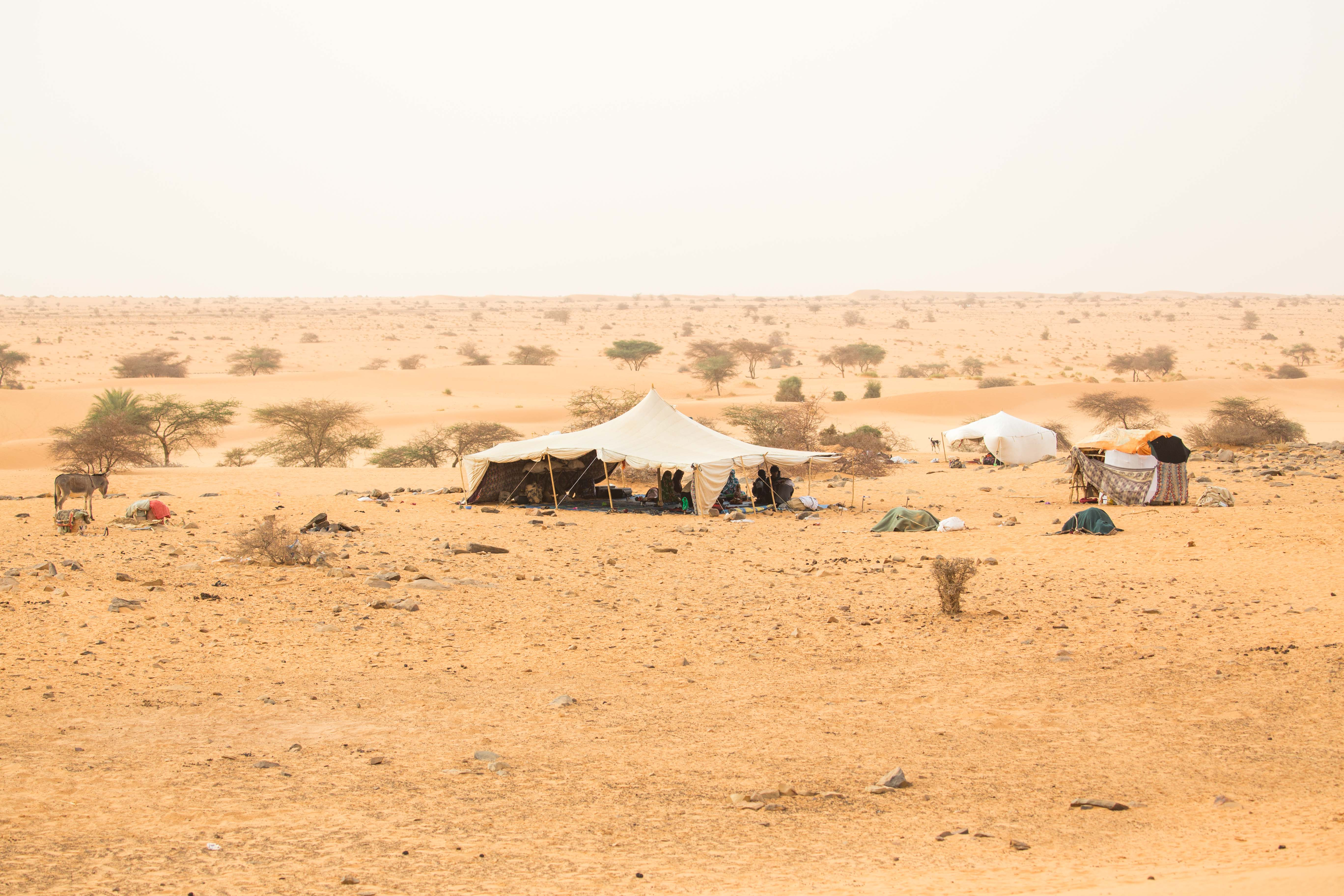 Camp nomade de la famille de Brahim, un berger du désert.